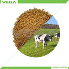 bacillus subtilis ração animal aditivo / bacilo subtilis animais aditivo