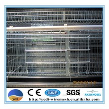 broiler chicks for sale/day old broiler chicks for sale