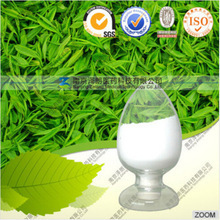 High quality FDA registered acacia catechu extract 98% HPLC Epicatechin with competitive price