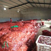 Trade assurance supplier export fresh onion
