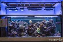 Pharosled 130W dimmable LED aquarium light, LED aquarium for coral marine fish tank