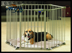 New Model Metal pet folding dog cage on Alibaba sale