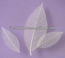Skeleton Leaves,deco leave,dried flower, died leave