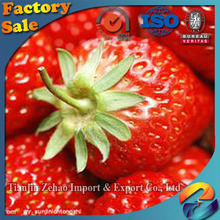 high quality with best price frozen Strawberry