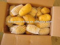 supply fresh golden shandong potato 100g-200g