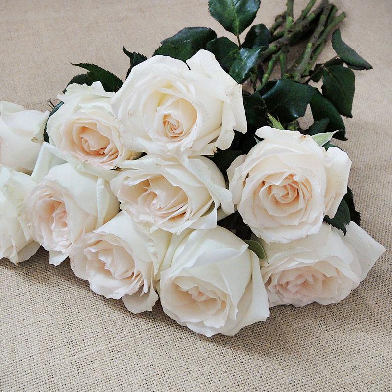 Wholesale Fresh Cut Flower White Rose For Wedding Flowers