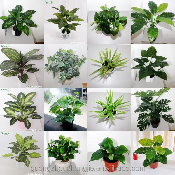 Guangzhou fabricant sjws14061504 wholesell perserved for Vente plante interieur