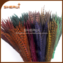 2015 Dyed colorful long pheasant feather natural pheasant feather