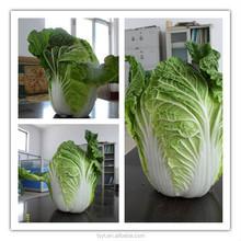 China supply fresh vegetable and fruit Fresh China Chinese long cabbage