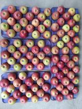 fresh qinguan apple /red apple fruit