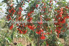 Secas Goji berry
