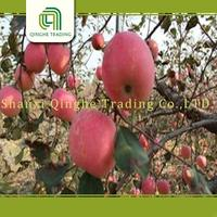 china delicious apple wholesale prices apple fruit with high quality