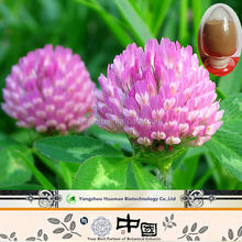 Supply Red clover isoflavones powder red clover extract