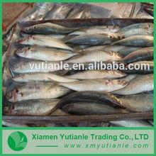 Hot china products wholesale Frozen Bonito Tuna