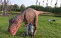 Peso ligero que recorre vestuario dinosaur