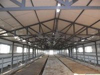 prefab steel structure cattle shed