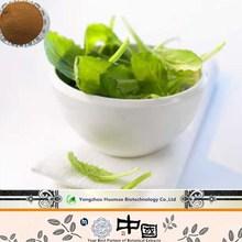 Peppermint Extract/Mint Extract 10:1 20:1 Mentha haplocalyx Briq. P.E.