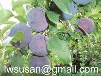 china fresh plum price