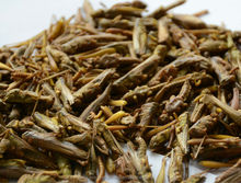 Freeze Dried Locusts For Sale