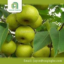 bulk chinese fresh pear