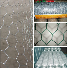 Poultry Wire Netting(factory)