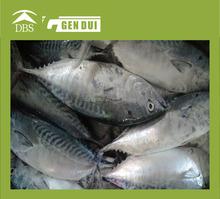 Frozen fresh whole yellowfin tuna frozen for sale
