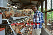 TAIYU Egg Layer Farm Chicken Poultry Equipment for Sale in Kenya