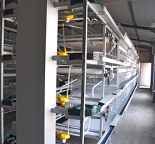 chicken equipment/ automatic feeding equipment/pullet cage system