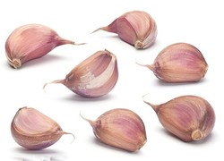 wholesale garlic