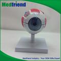 أحدث طراز عالية الجودة الطبية mfm021 العين النموذجية