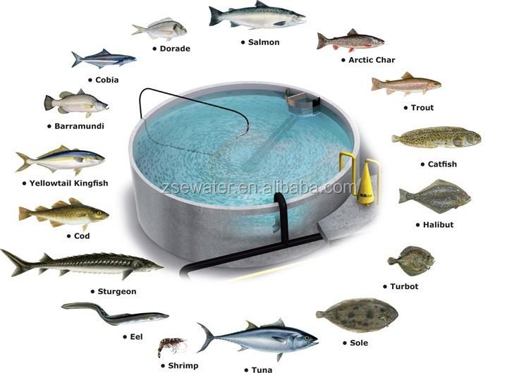 Ras Recirculation Aquaculture System Layout Design Indoor