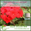 Touchhealthy supply Geranium essential oil with competitive price