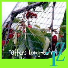 factory price plastic anti bird net / vineyard bird netting / bird net mesh for sale