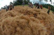 coconut fibre 999