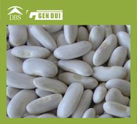 Pure natural Medium white kidney bean