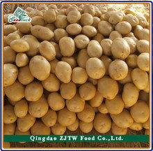 Baby Potato Fresh Pototo Russian Importers of Potato