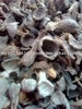 Palm Kernel Shell PKS