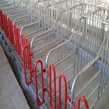 fencing equipment pig gestation stall