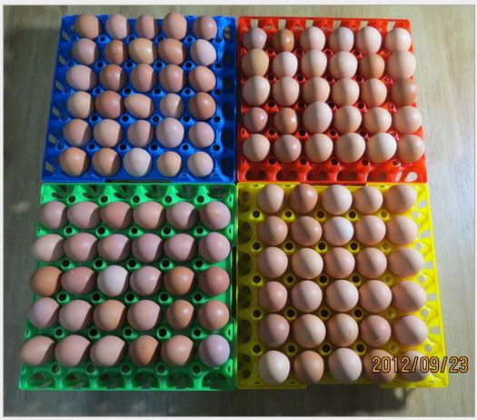 30 oeuf plateau boîte PE d'oeuf en plastique