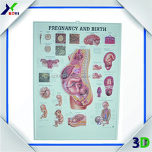 Wholesale High Quality 3D Wall Chart For Hospital, pvc embossed medical chart
