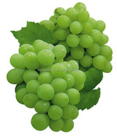Natural Grape Seed Extract P.E. Proanthocyanidins