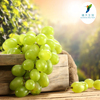 Solvent Extraction Type Powder Form Water Soluble Natural Anti-oxidant Grape Skin P.E.