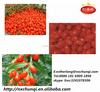 Ningxia Goji/ Goji berry 250/280/350 for hot sale