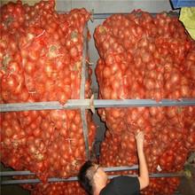 Chinese fresh onion exporter yellow golden onion