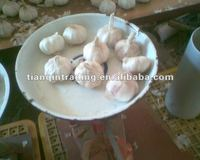 fresh normal white garlic exporter