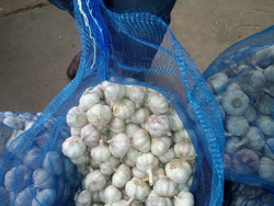 garlic suppliers from india market
