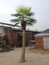 Artificial Outdoor Coconut Palm Tree for Landscaping Decor