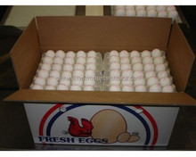 Export and supply of Farm fresh Indian White shell chicken eggs