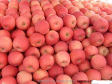 2015 Best Selling Products Fuji Apples