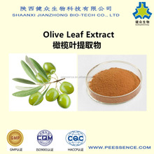GMP factory supply best popular high quality Hydroxytyrosol Oleuropein Olive Leaf Extract